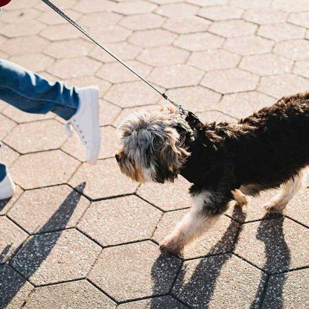 Малолетни починиоци кривичних дела помагаће напуштеним животињама